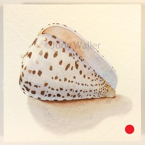 jwaller_shell-cb02