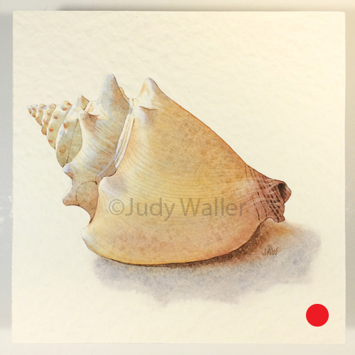 jwaller_shell-cb03