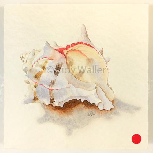 jwaller_shell-cb04