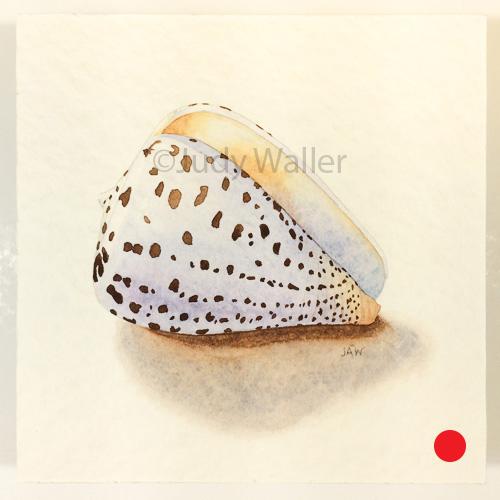 jwaller_shell-cb05