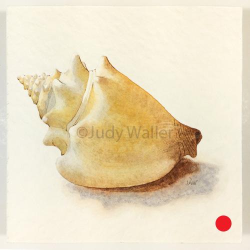 jwaller_shell-cb06