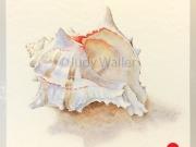 jwaller_shell-cb01