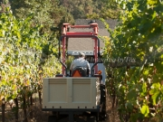 Foon Harvest_09-19-15-8826