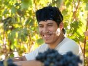 Foon Harvest_09-19-15-8829