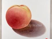 jwaller_peach