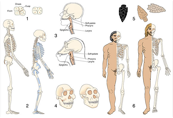 archaeological and anthropological illustrations