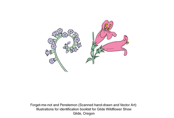 scanned hand-drawing of flower into vector art